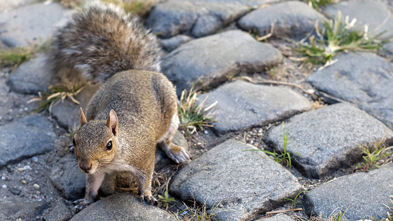 Ah, nuts! Squirrel leaves 45,000 people without power in San Diego