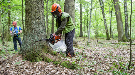 Polish loggers beat TV operator & damage equipment in forest at center of EU-Poland row