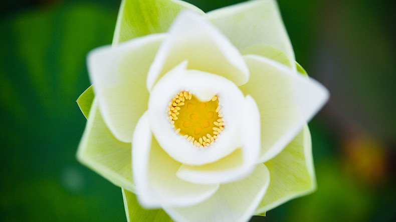Bloom from the past: Scientists reconstruct world's 1st flower