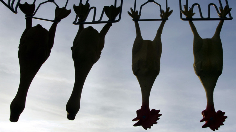 Turkey terror: 3,000 birds scared to death at fowl farm