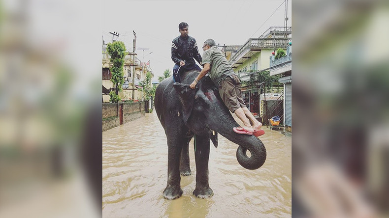 Elephants save hundreds of people stranded by Nepal floods (PHOTOS)
