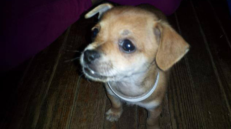 PETA seized family dog & euthanized it without consent (PHOTO)