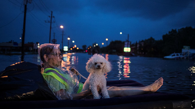 Not just humans: How animals weather Texas storm & flooding (PHOTOS, VIDEOS)