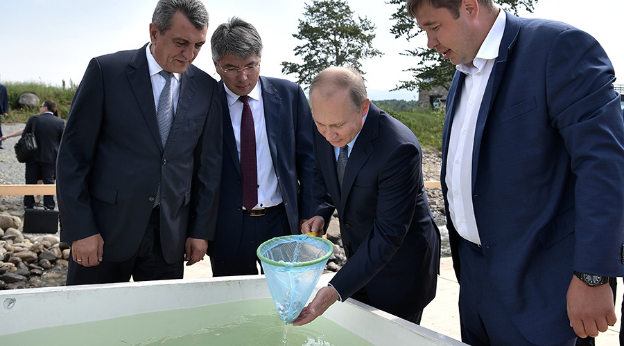 Putin ignores wet shoes warning to release batch of endangered fish into Lake Baikal (VIDEO)