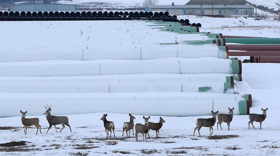 'Simply no need': Keystone XL pipeline opponents not allowed to testify in Nebraska hearings