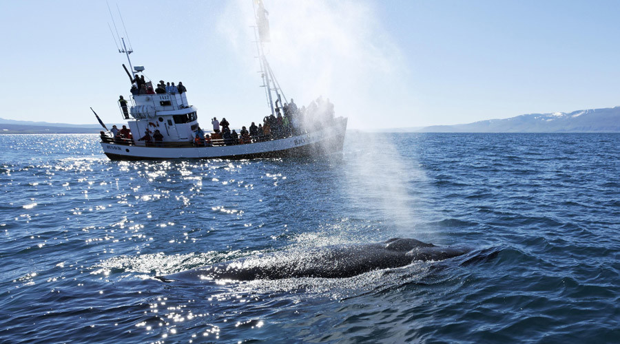 Moby Dick returns? Humpback whale smashes fishing boat & crew into the air
