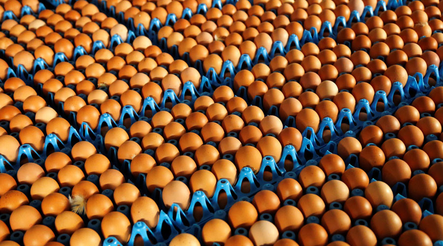 The yolk's on you: Norway's Olympic team overwhelmed with 15,000 eggs they didn't order