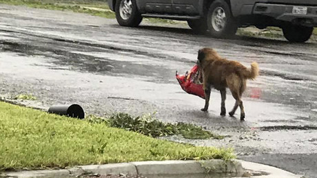 Hurricane Harvey dog gets tongues wagging online (PHOTO)