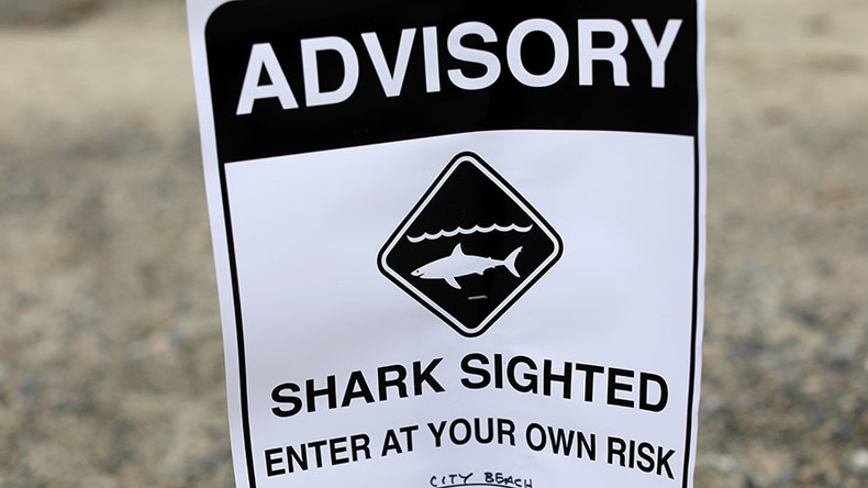 Storm shark: How the same 'Great White' has stalked 4 hurricane disasters (PHOTOS)