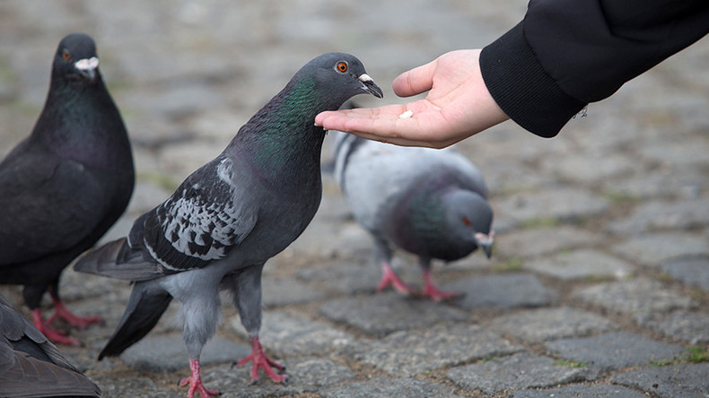'Homeless street drinkers eating pigeons' reports investigated by police