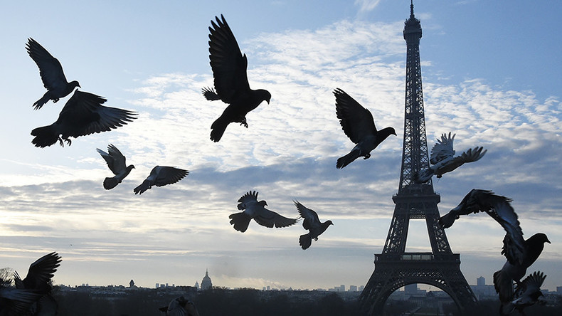 Paris to hire falcons and buzzards for €2,500 each to scare off pooping pigeons