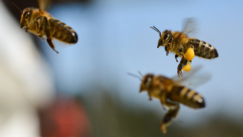 'Gigantic mob' of bees attack in California, six people hospitalized