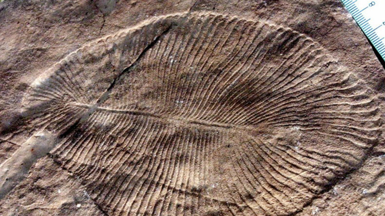 Weird ribbed sea fossil predating dinosaurs finally classed as 'animal'