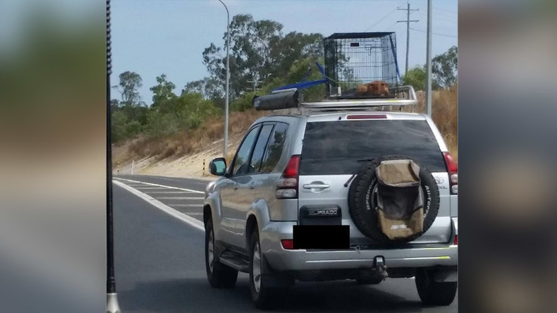 Puppy strapped to car roof in scorching heat as driver speeds down highway (PHOTO)