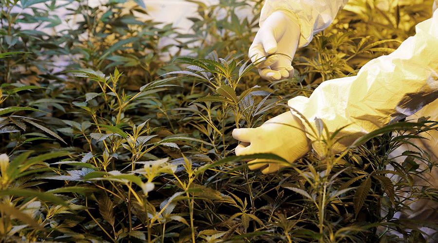 German teen calls cops on mom over secret cannabis plants