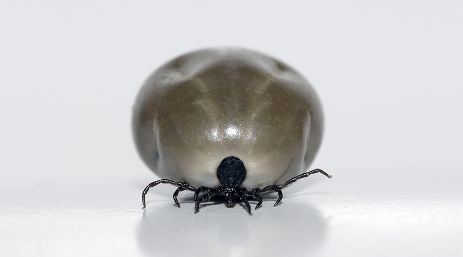 Tick escapes during Japanese press conference on deadly disease prevention