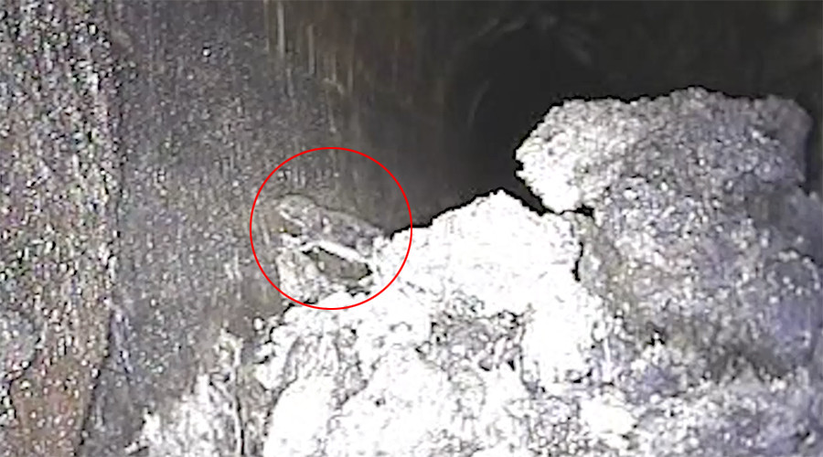 Disgusting moment rat crawls out of 130-tonne 'fatberg' lodged in London sewer (VIDEO)