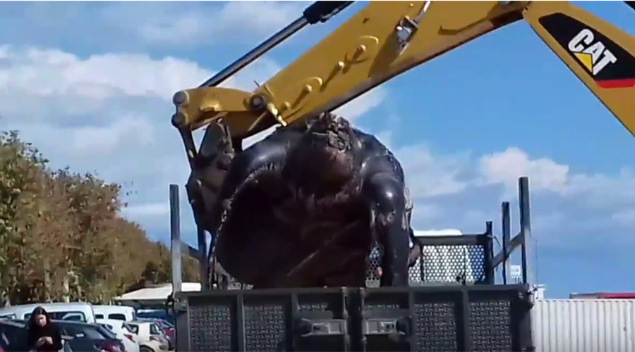 Gonna need a bigger crane: Enormous turtle found on Spanish beach (PHOTOS, VIDEOS)