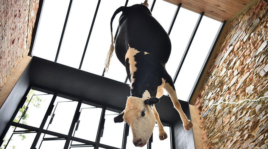 Dead cow hanging from ceiling draws outrage at Aussie pizzeria