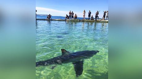 'No clear cause of death': Massive shark kill sparks mystery (PHOTOS, VIDEOS)