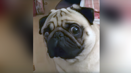 Video of pug making Nazi salute is 'grossly offensive,' Jewish leader tells court