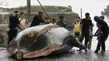 Shark attack warning: Fears man-eaters will head for beach where 140 whales died (IMAGES, VIDEO)