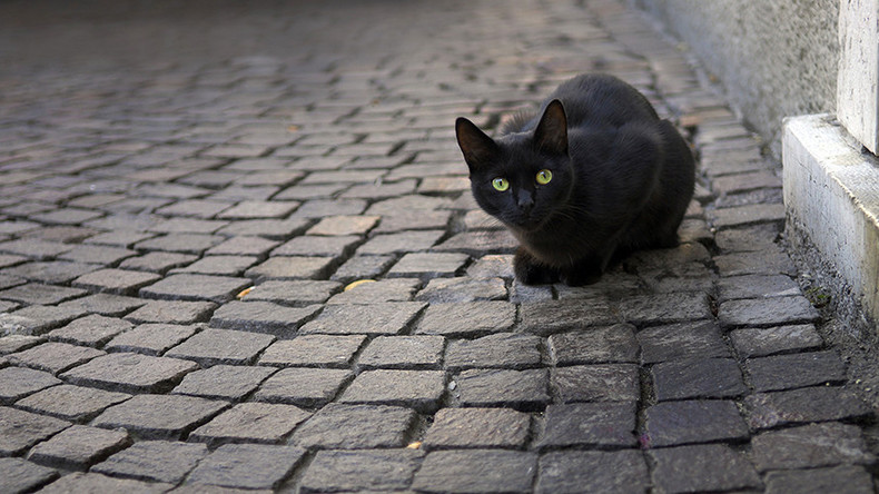 'Witchcraft' blamed for disappearance of 7 black cats from Yorkshire villages