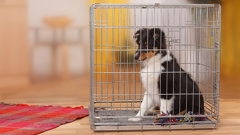 California forces pet stores to sell rescue animals with groundbreaking legislation