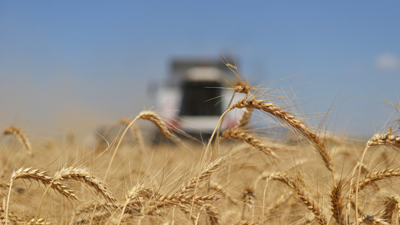 Russia on track to break 40-yr Soviet record on grain harvest