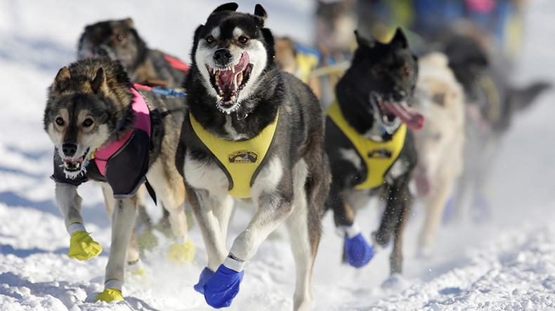 Dogs on drugs: World's most famous sled dog race facing doping scandal