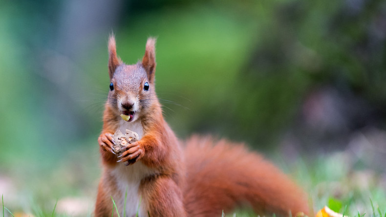 Viking squirrels may have brought leprosy to Britain, according to Cambridge study