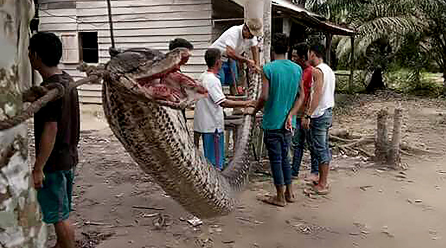 Snakes on a plate: Locals feast on python after horror plantation attack (PHOTOS)