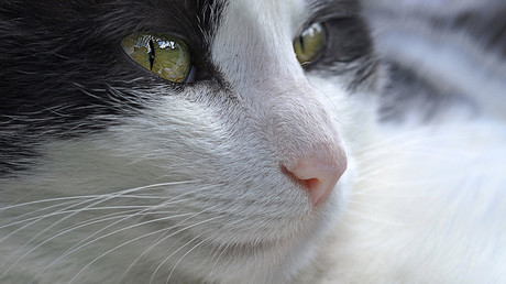 'This is about a shy cat': Fake plane bomber defies Sweden ban to 'save' feline friend