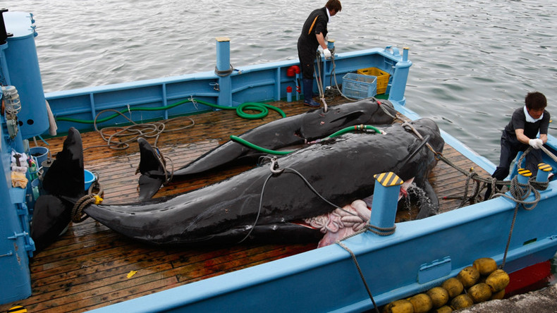 Japanese whalers plan to kill more than 300 on new Antarctic Ocean mission