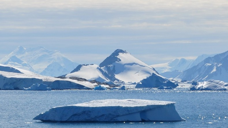 Prehistoric Antarctica forest fossils offer scientists 'glimpse of life before the extinction'