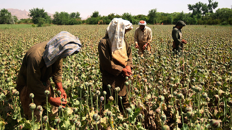 'Afghan opium boom to benefit European, Asian criminal groups'