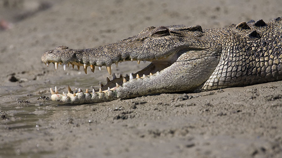 Two Australians & their dog survive 4 nights on roof of stuck car 'surrounded by crocodiles'