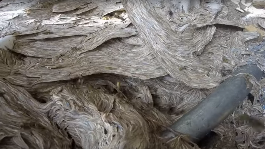 Exterminator shares nightmarish footage of massive hornet's nest (VIDEO)