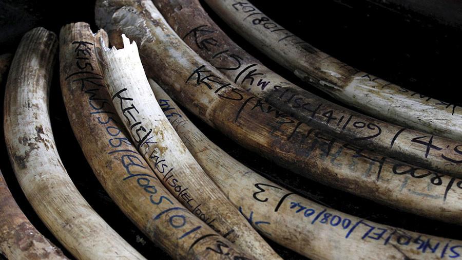 Trump puts 'trophy' elephant ban reversal 'on hold'