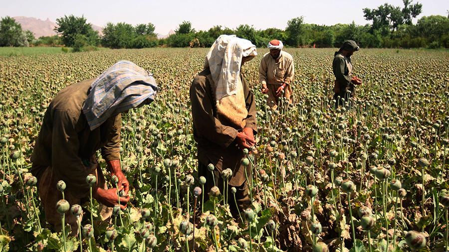 'Afghan opium boom to benefit European, Asian criminal groups'