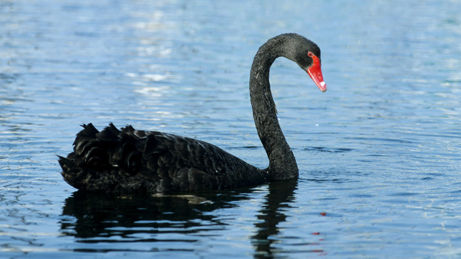 Another 9/11 may be the black swan event that triggers global stock market meltdown