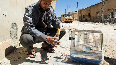 FILE PHOTO: A Syrian man collects and bags the body of a dead bird, reportedly killed by a suspected toxic gas attack in Khan Sheikhoun, in Syria's northwestern Idlib province © Omar haj kadour