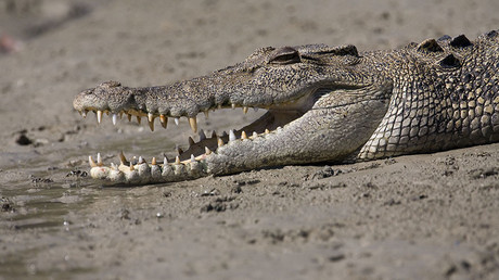 Two Australians & their dog survive 4 nights on roof of stuck car surrounded by crocodiles