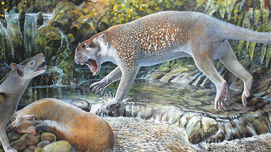 Flesh-eating ancient 'marsupial lion' species discovered