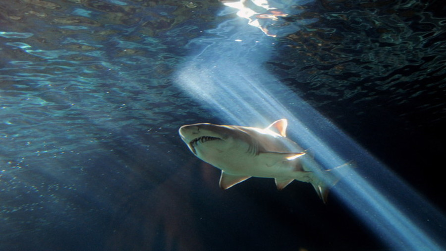 New bride bitten by shark she thought was her husband (VIDEO)