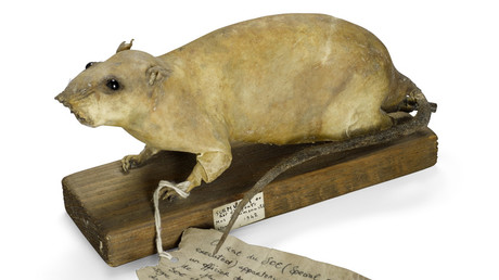 'Rat bomb' designed for British spies to fight Nazis up for auction