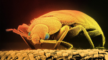 Sleep tight, don't let the bed bugs ignite: Amateur pest control starts fire (VIDEOS)