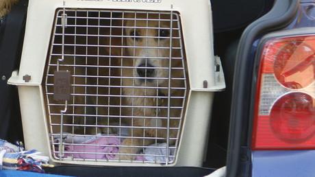 30 dogs die in hot van, fugitive owner faces 90 yrs in jail (DISTURBING VIDEO)