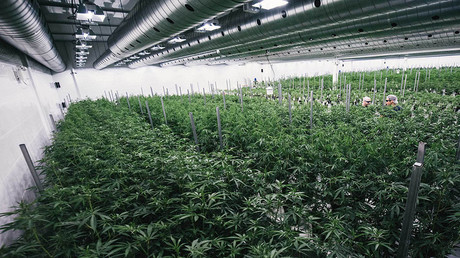 High rollers: Big business invests $2.7bn in cannabis in 2017 – 3 times more than last year