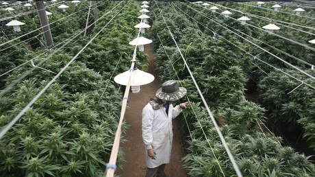 Medical marijuana compound non-addictive, should not be scheduled drug - WHO